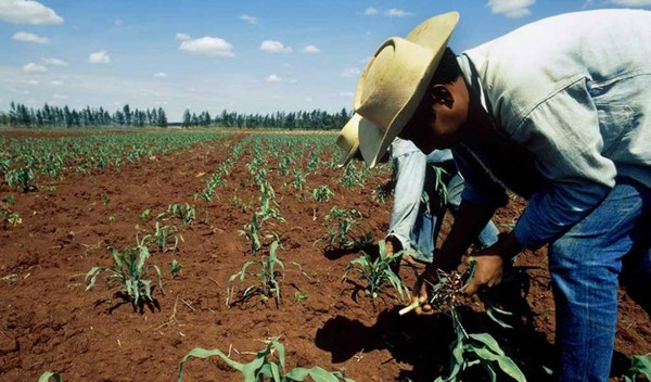 El boom del sector agroalimentario en México: entre la bonanza y la desigualdad