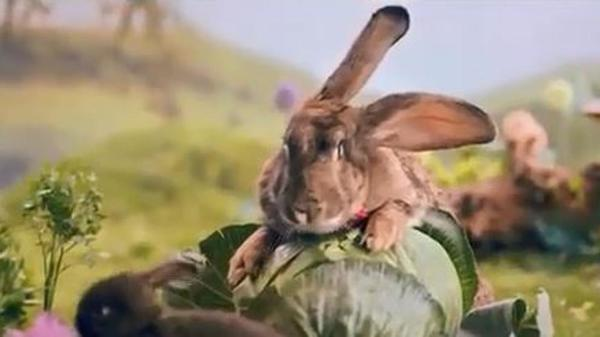 Polonia pide ciudadanos inspirarse en conejos para remediar baja demografía