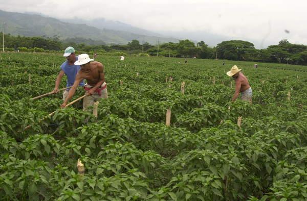 Otorgan en Tezontepec incentivos a campesinos