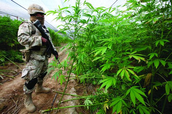 ¿Por qué se criminaliza la mariguana?