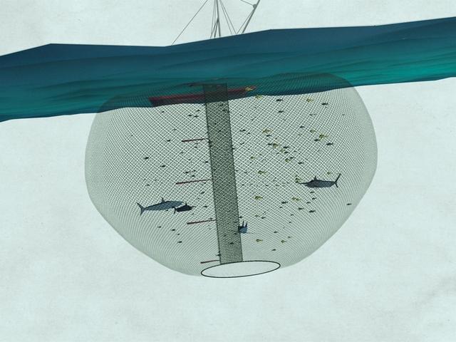 Cuando la ilegalidad opera en el fondo del mar