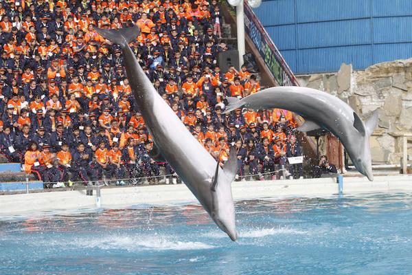 Prohíben espectáculos y terapias con delfines en la CDMX