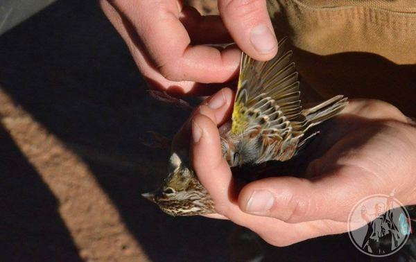 """Se extinguen """"aves migratorias"""""""