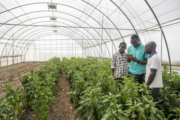 El viaje de un granjero de la agricultura a los algoritmos