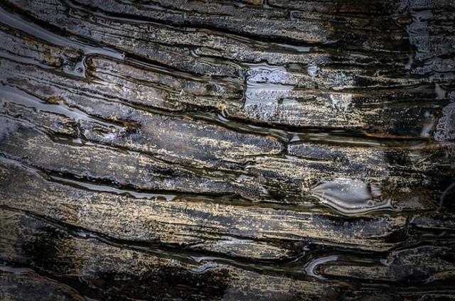 Petróleo del mesozoico: la selección natural de los fósiles