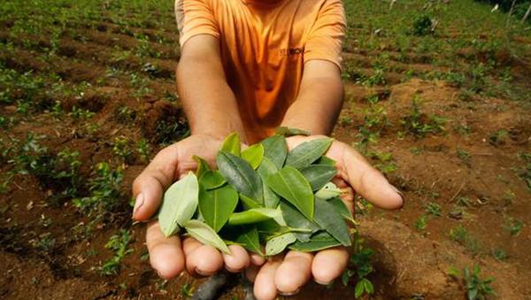 Presidente boliviano defiende la hoja de coca