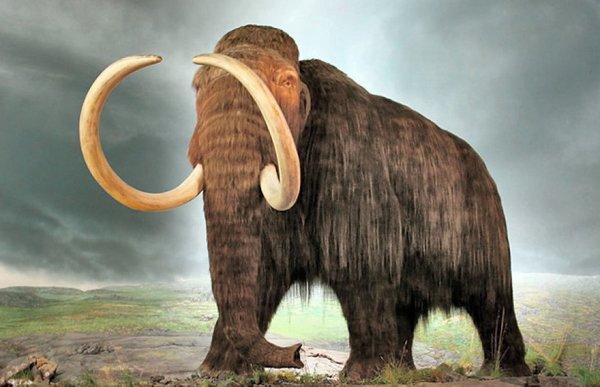 Las mutaciones genéticas de los mamuts