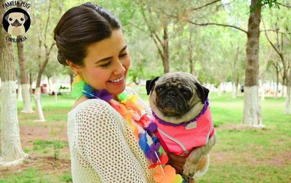 Crean club de fans de perros Pug en Chihuahua