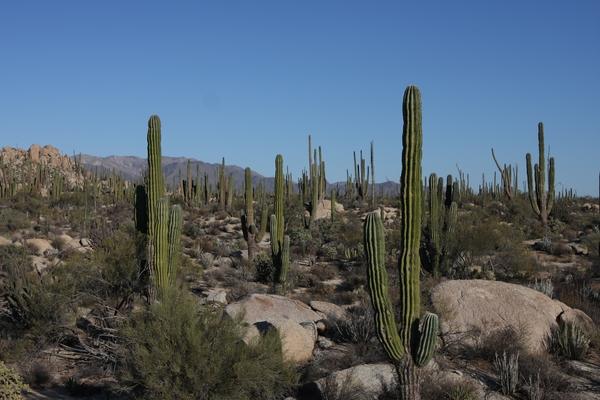 La Baja convertida en oasis