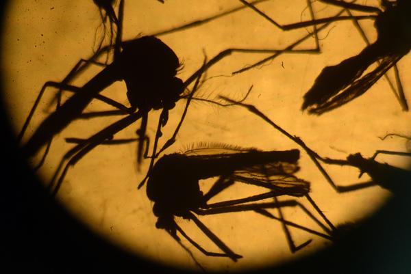 Realizan ensayos nucleares en México para combatir el Zika